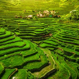 majestic view of banaue rice terraces