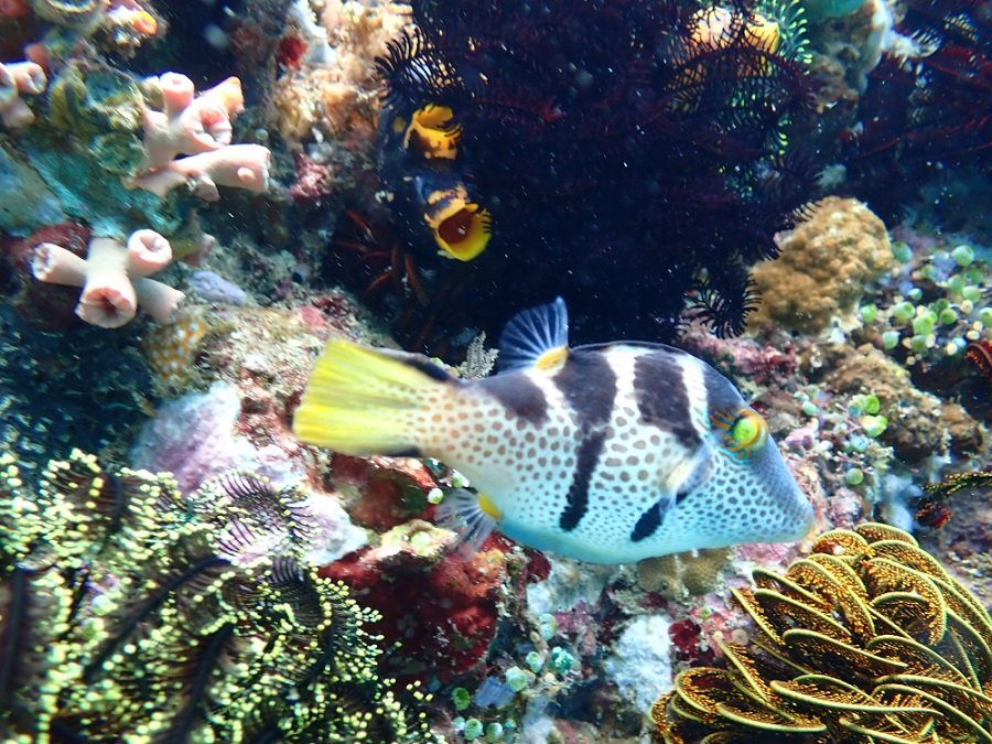 colorful corals and fish in coral garden